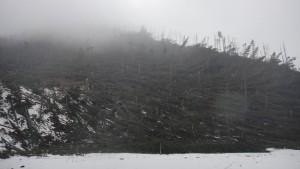 Poprzewracane drzewa w dolinie Kościeliskiej