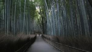 Ścieżki bambusowe, Arashiyama