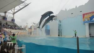 Delfiny w oceanarium Sumasui